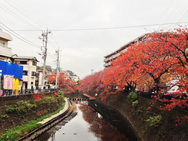 th_oookagawa